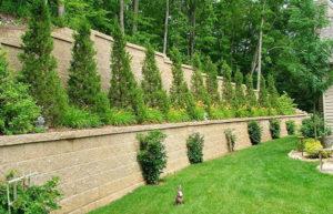 Как выбрать кусты для живой изгороди